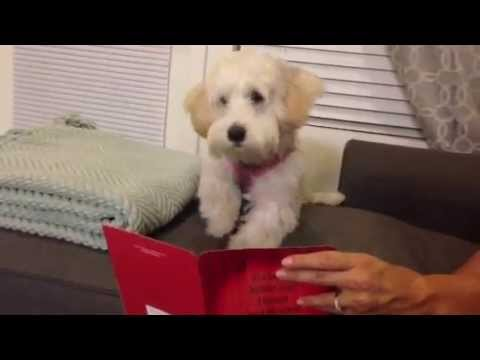 My Dog Sings Along With A Birthday Card