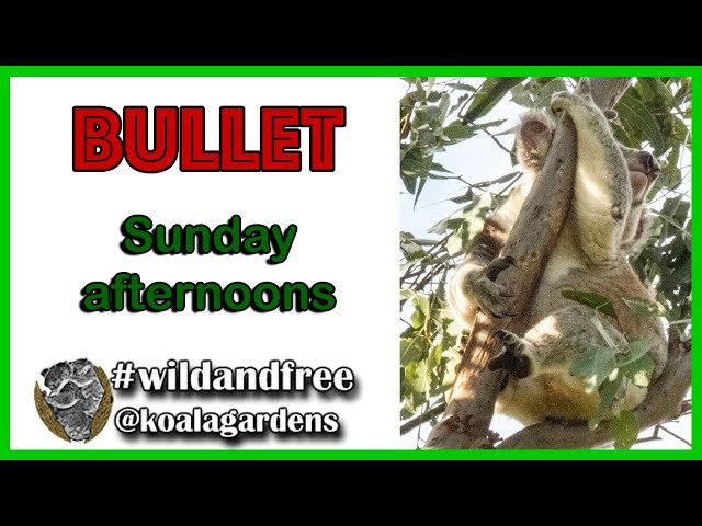 Bullet - lazing on a Sunday afternoon