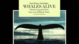 Play Concerto for Whale and Organ