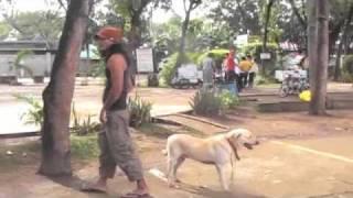 Basic Dog Obedience--charlie