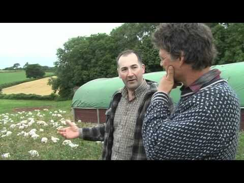 How Riverford's organic chickens are reared