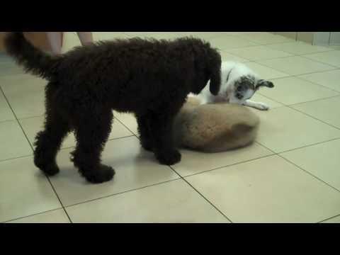 Socialization & Playtime at Puppy Kindergarten