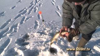 Рыбалка с Д Чвировым  Ловля на жерлицы .
