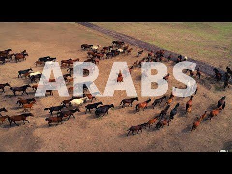 Arab Culture and Traditions I Middle Eastern Music I Islamic Culture I Desert Sun Rise I Camel Train