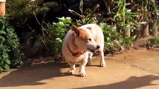 大東犬の家族です!! ほのぼの~(投稿者:DOR39事務局)