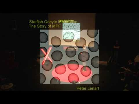 Creative Breakthroughs | Tim Hunt | TEDxLancasterU