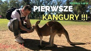 🌴 AUSTRALIA VLOG#4 PIERWSZE KANGURY, GABRIEL M