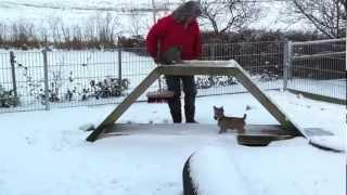 Cairn Terrier hvalpe i sne