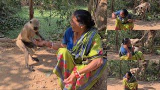 Very funny video must watch||लंगोर्स मेरी मां के इरादों को समझते हैं और उसके साथ खेल रहे हैं।