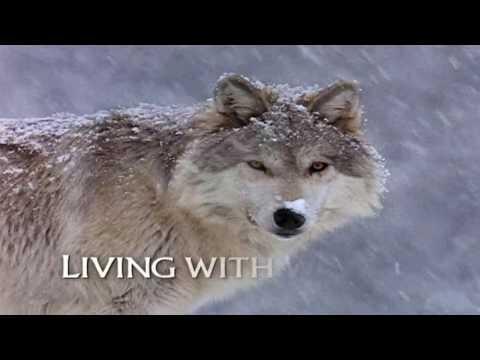 Стас Шклярский (Инкогнито) - Волчья
