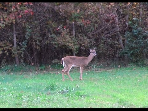 Hunting land for sale memphis tn