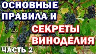 Как сделать домашнее вино - Квартирное вино - Основные ошибки - Важные секреты - Часть 2