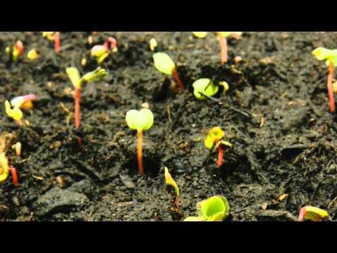 Plant a bulb meditation
