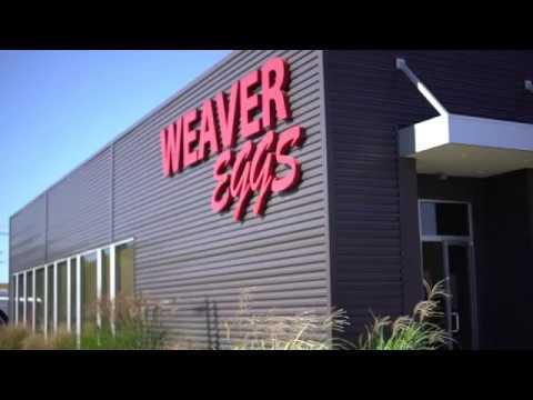 Versailles Business - Weaver Eggs