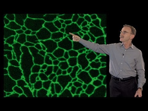 Mysterious Membranes Within The Cell - Randy Schekman (UCB/HHMI)