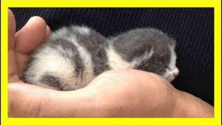 子猫は命を救われて以来 男性をお父さんだと思い込む…甘え続ける猫の姿が可愛いすぎる!