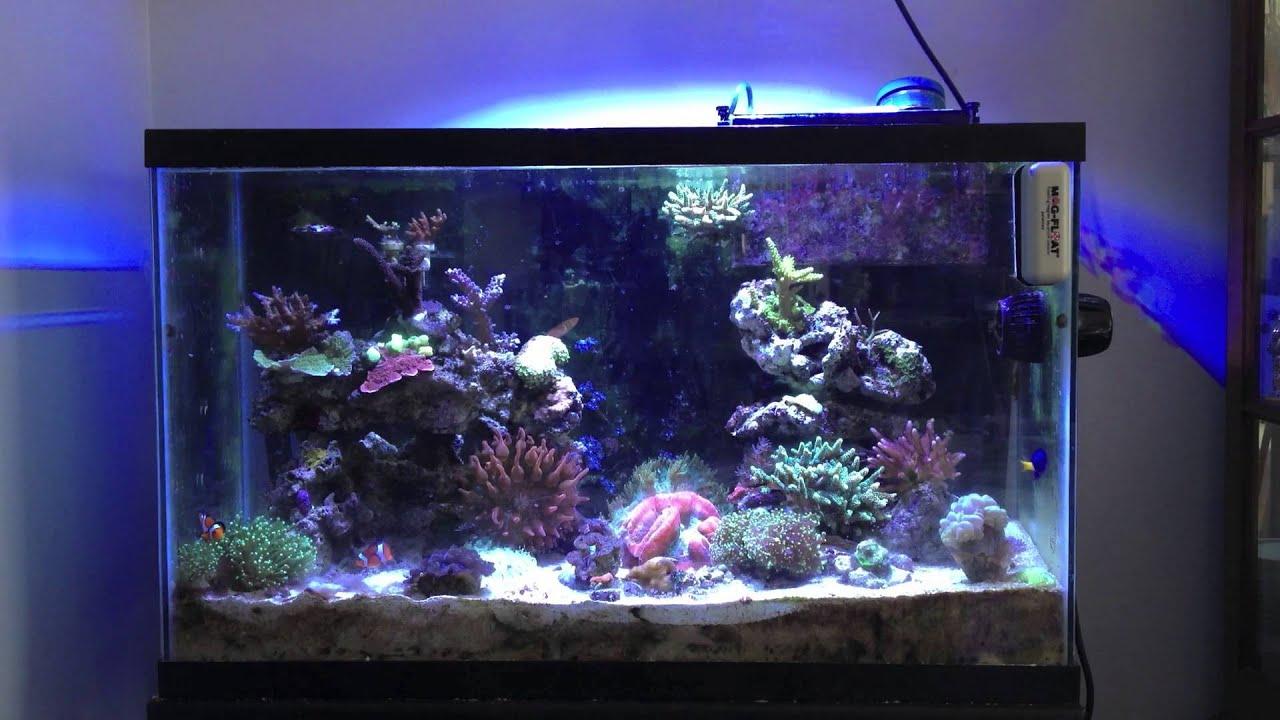 A beginner 39 s guide to reef tank water parameters youtube for Best fish tanks for beginners