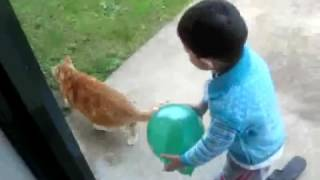 Amrit and cats friendship (Baby Video)