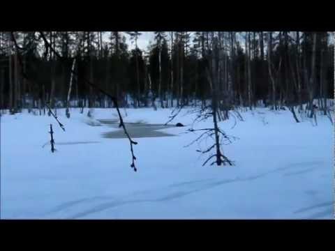Metsästys Videoita