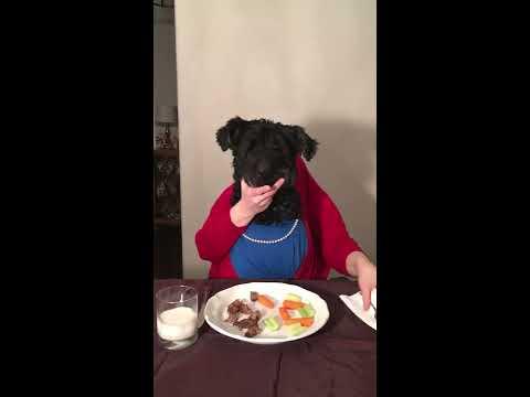 Brinkley's Banquet - Giant Schnauzer Dog's Display of Amazing Dinnertime Dexterity