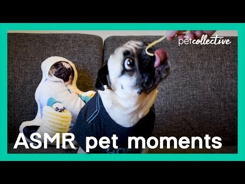 Best ASMR Pet Moments | The Pet Collective