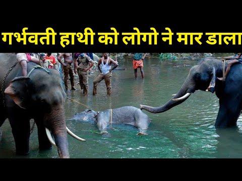 Kerala elephant death Story | 🐘🔥🔥🔥♥️