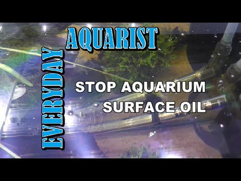 How To Stop Oil Films On Top Of Aquariums