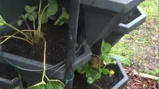 Productive Backyard, Vegetable & Herbs, Raised Garden Beds, Stackapots,greensmart Pots & Chickens
