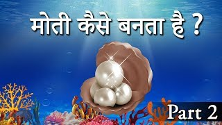 मोती कैसे बनता है ?  || How Oysters Make Pearls || How Are Pearls Formed Naturally thumbnail