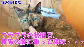 4ヶ月の子猫が亡くなる前の晩にフラフラの状態で、家族1人1人の膝に乗って来た・・・【猫の泣ける話】