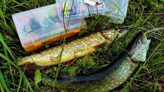 Ловля хищника: рыбалка в Беларуси и ЦЭТ Станьково (осень 2017)