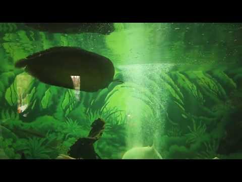 vlog-:-lembang-park-and-zoo-|-yennie-dwijayanti