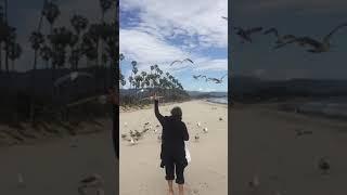 Corazoni  seagulls thumbnail