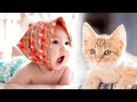 Babies and Cats Funny Video - funny cats and babies playing together ★ || mimo cats and babies