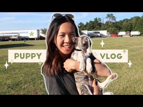 adopting a puppy, moving, & lasik (horror story ??)   a vlog