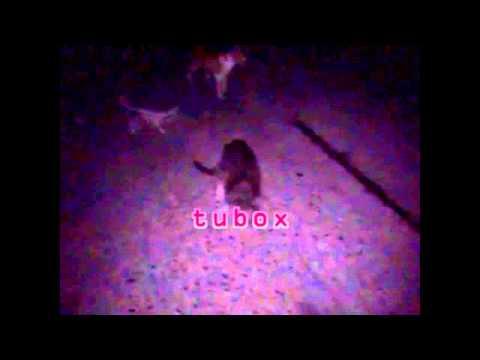 عندما تتزاوج الكلاب مع القطط ليلا +16 thumbnail