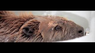 Doug Aitken - Electric Earth - MOCA