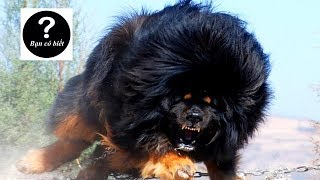 Top 7 Most Aggressive Dog Breeds in the world