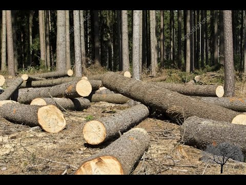 продам лес кругляк Тюмень