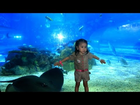 Manila Ocean Park - Theme Park for Family - Donna The Explorer