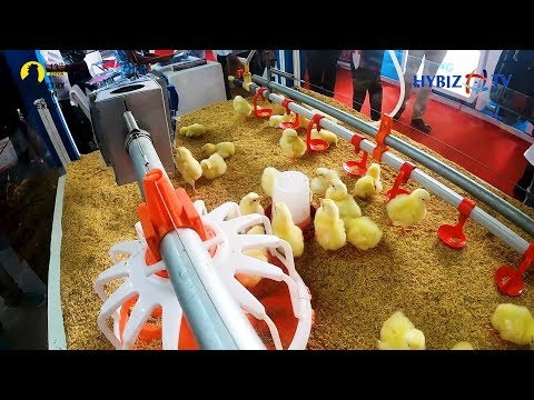 Poultry Cages And Equipment For Poultry Industry | Vijay Raj Poultry Equipments