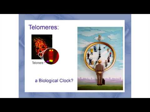 Cryonics - Alcor 40 Conference - Josh Mitteldorf