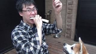 【ASMR】牛あばら骨咀嚼音【秋田犬】
