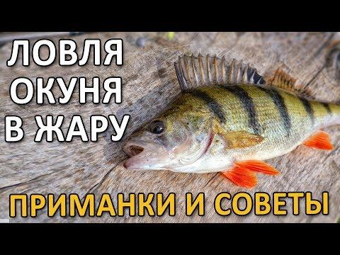 ЛОВЛЯ ОКУНЯ В ЖАРУ - ПРИМАНКИ И СОВЕТЫ! Рыбалка на окуня 2019!