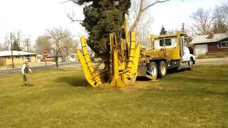 Farr park greeley tree transplant heavy equipment(4)