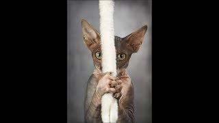 Подборка приколов с животными за 2018/кошки
