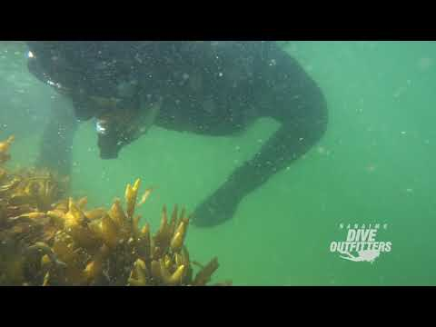 Snorkel with Seals