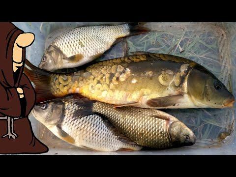 Живем на рыбалке!!!  Рыбалка на реке и на пруду 2019