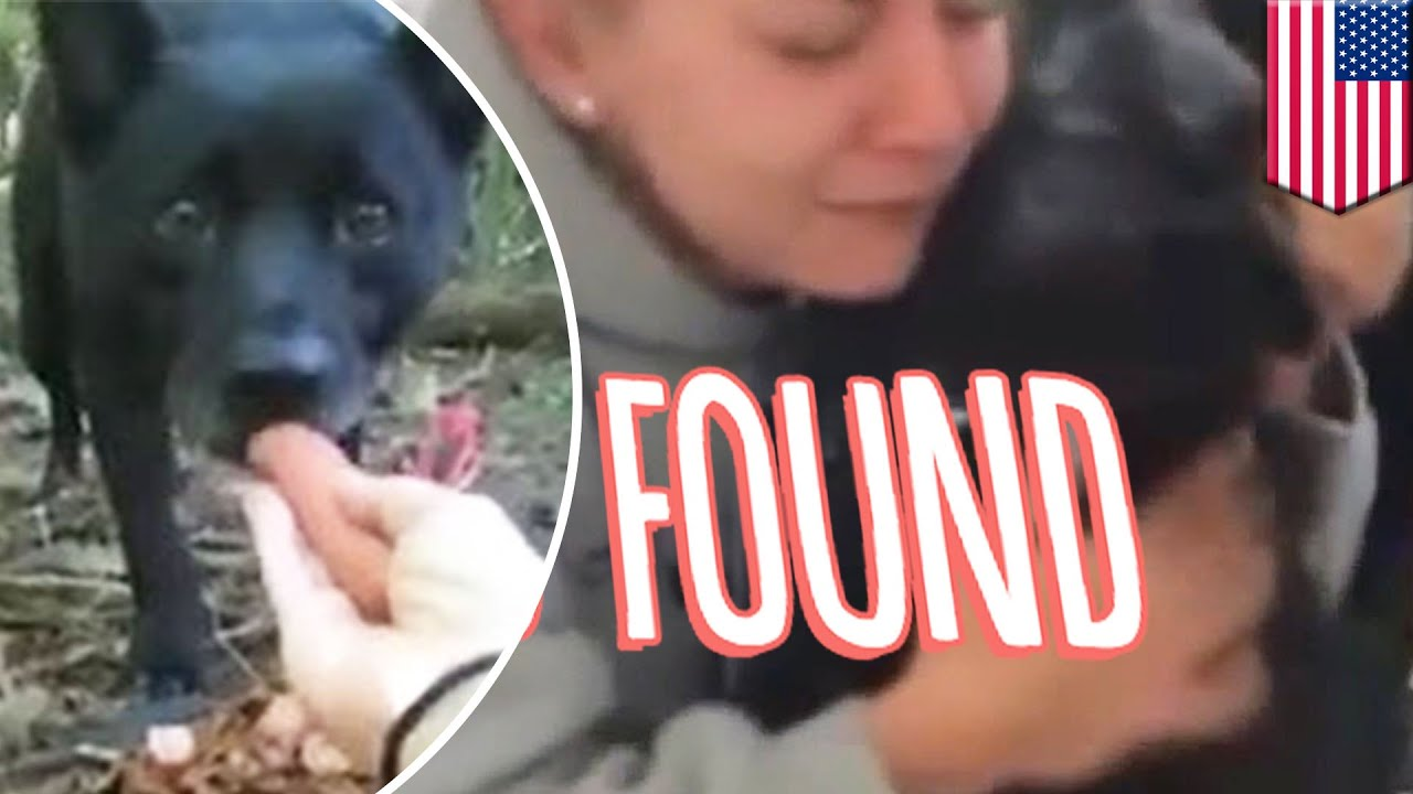 有洋蔥 愛犬失蹤兩年重溫懷抱 - YouTube