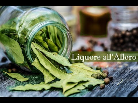 Liquore all'alloro digestivo - ricetta Allorino
